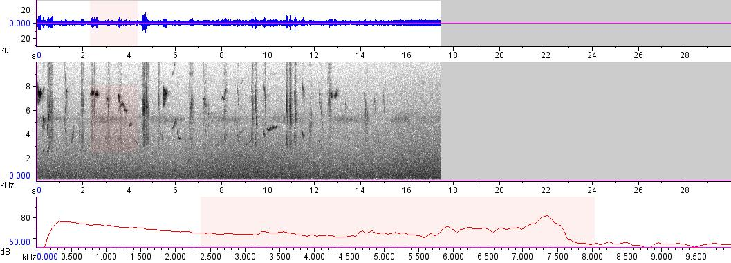 Sonogram of recording #AV 8467