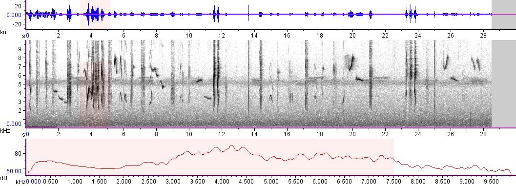 Sonogram of recording #AV 8468