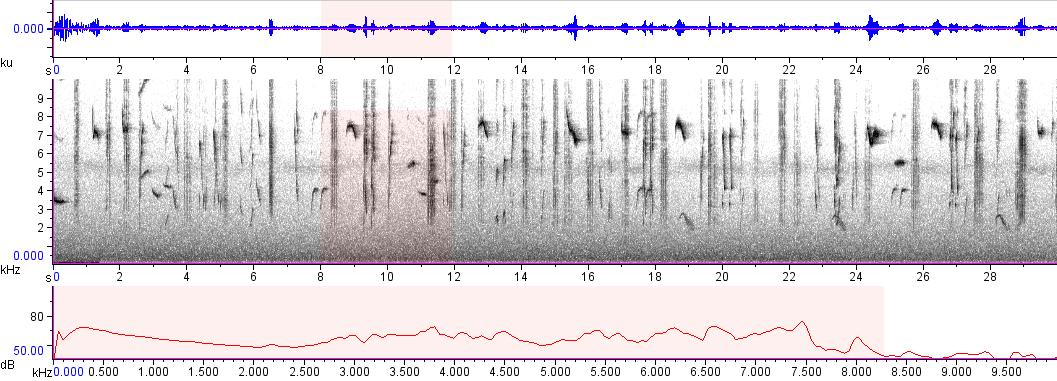 Sonogram of recording #AV 8470