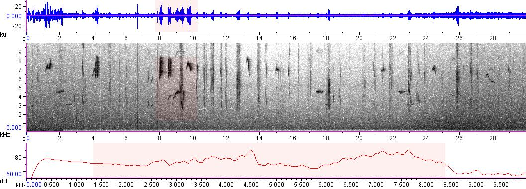 Sonogram of recording #AV 8473