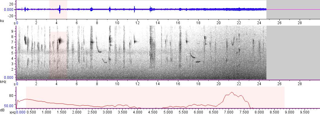 Sonogram of recording #AV 8476