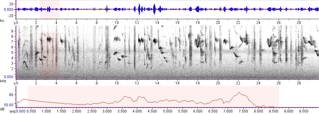 Sonogram of recording #AV 8477