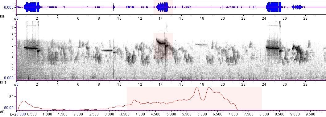 Sonogram of recording #AV 8505