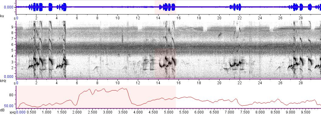 Sonogram of recording #AV 8510