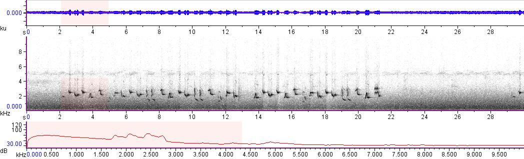 Sonogram of recording #AV 8526