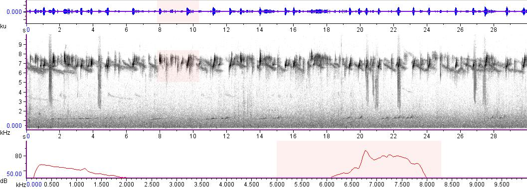 Sonogram of recording #AV 8553