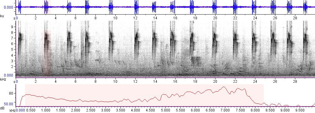 Sonogram of recording #AV 8554