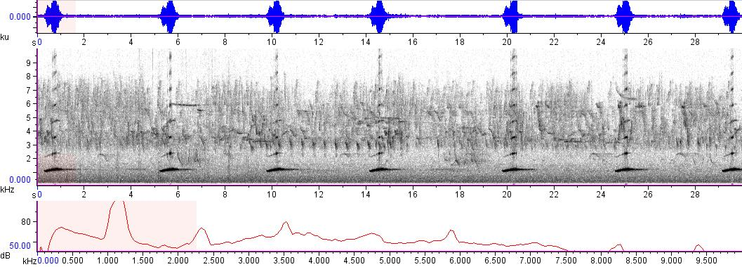 Sonogram of recording #AV 8562