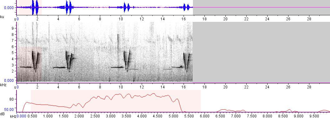 Sonogram of recording #AV 8567