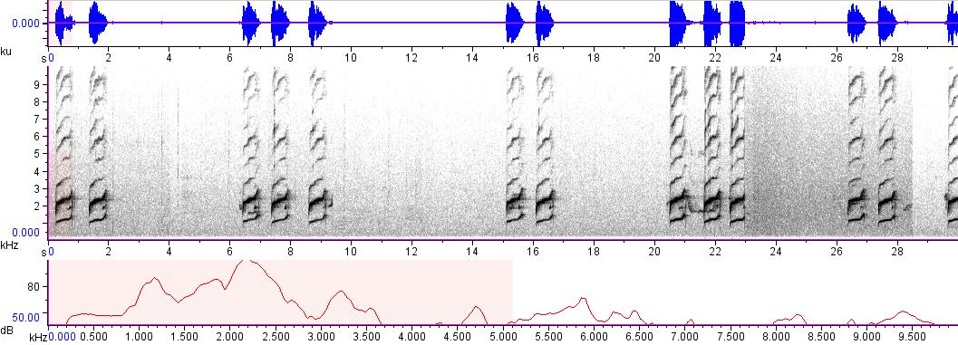 Sonogram of recording #AV 8591