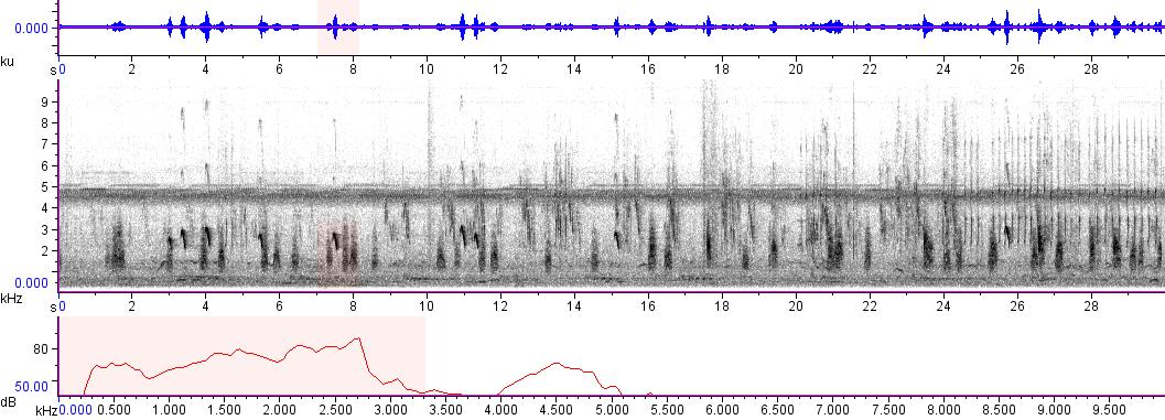 Sonogram of recording #AV 8592