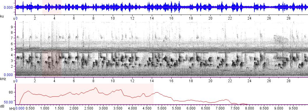 Sonogram of recording #AV 8593