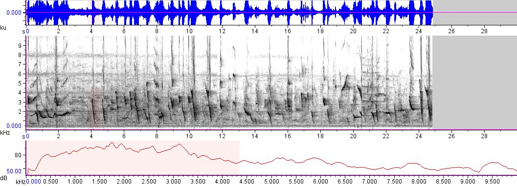 Sonogram of recording #AV 8599