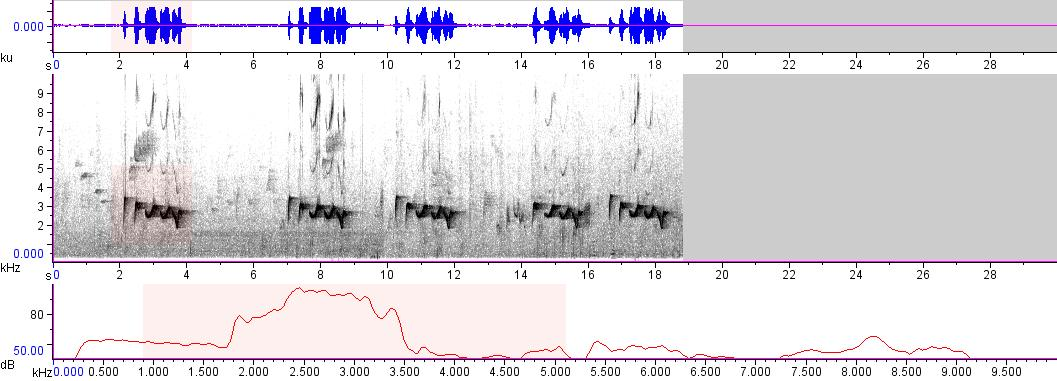 Sonogram of recording #AV 8601