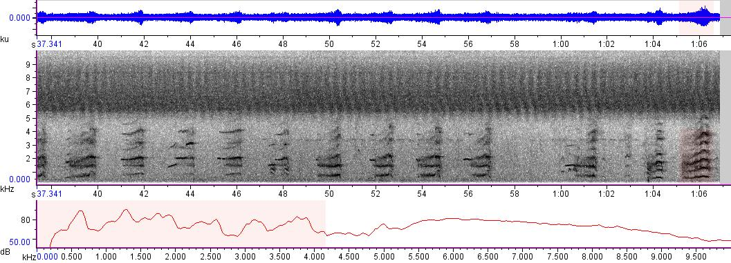 Sonogram of recording #AV 8606