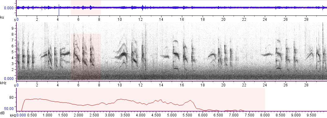 Sonogram of recording #AV 8607