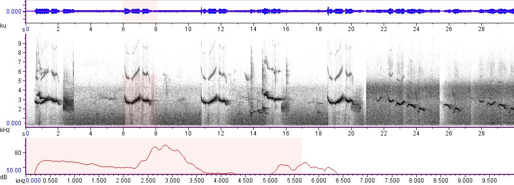 Sonogram of recording #AV 8609