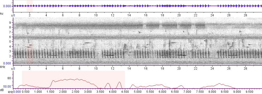 Sonogram of recording #AV 8613