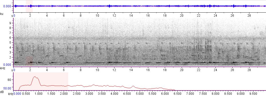 Sonogram of recording #AV 8616
