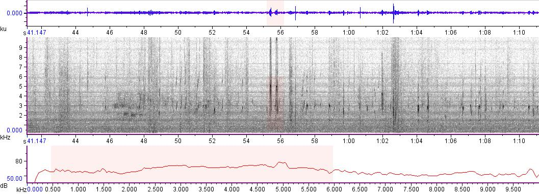 Sonogram of recording #AV 8620