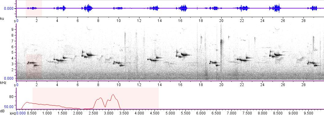 Sonogram of recording #AV 8625