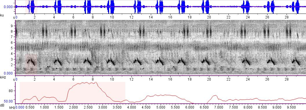 Sonogram of recording #AV 8632