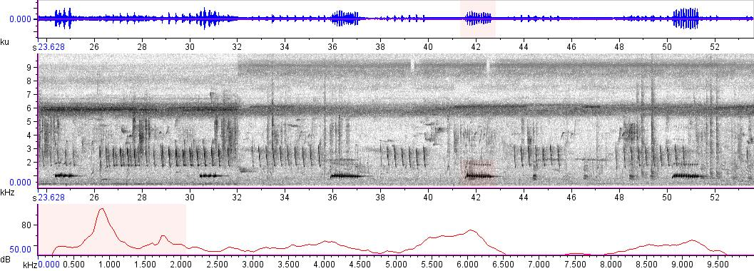 Sonogram of recording #AV 8639