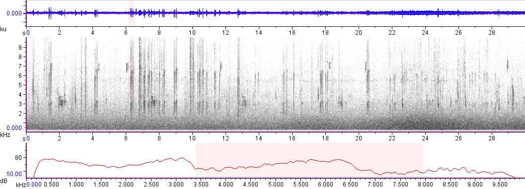 Sonogram of recording #AV 8640