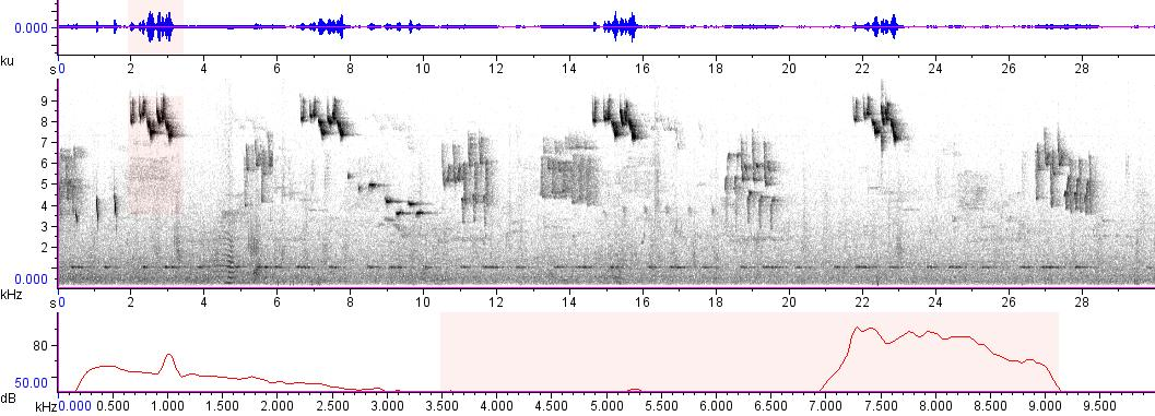Sonogram of recording #AV 8648