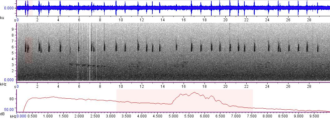 Sonogram of recording #AV 8649