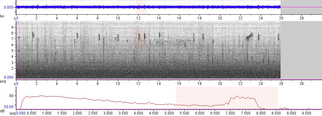 Sonogram of recording #AV 8662