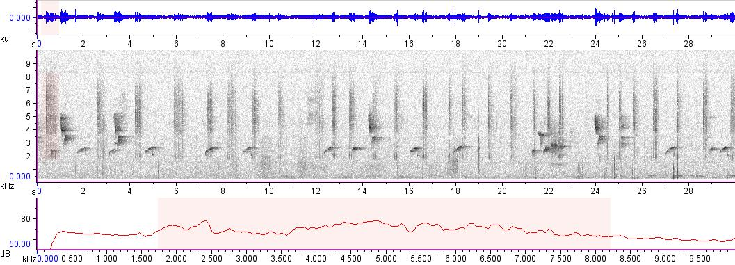 Sonogram of recording #AV 8664
