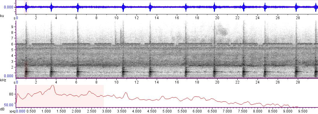 Sonogram of recording #AV 8813