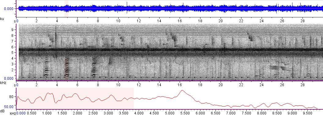 Sonogram of recording #AV 8814