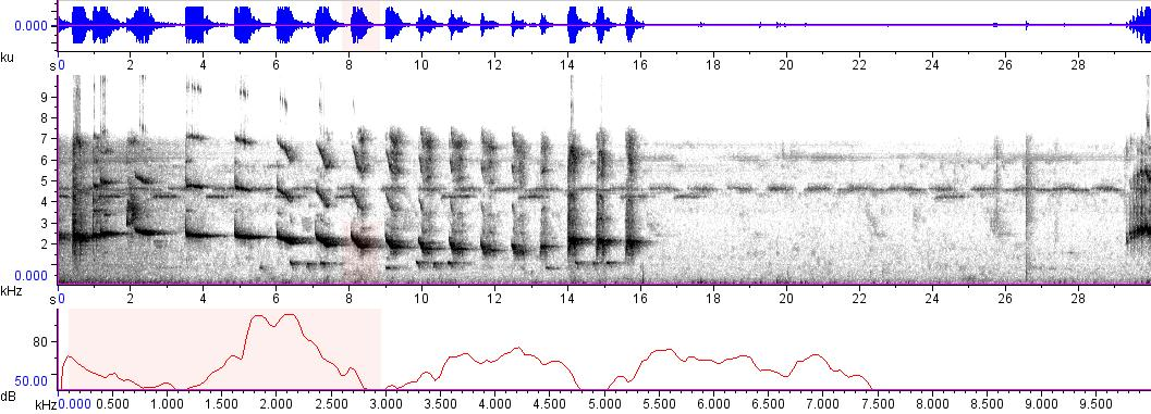 Sonogram of recording #AV 8818
