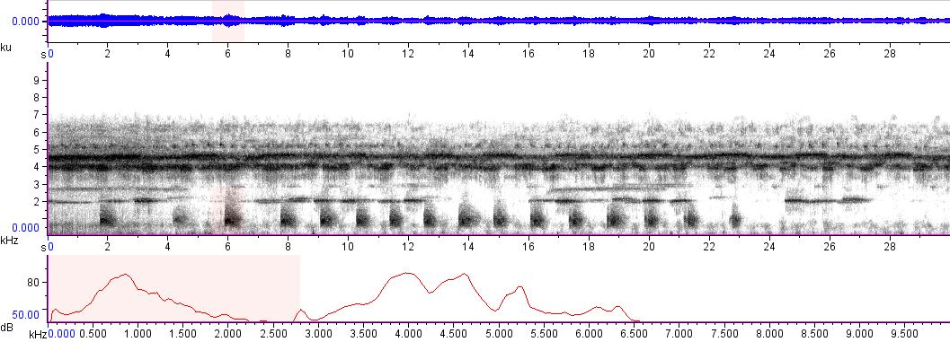 Sonogram of recording #AV 8834