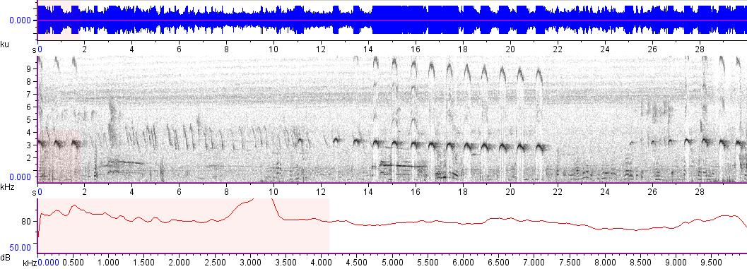 Sonogram of recording #AV 8847