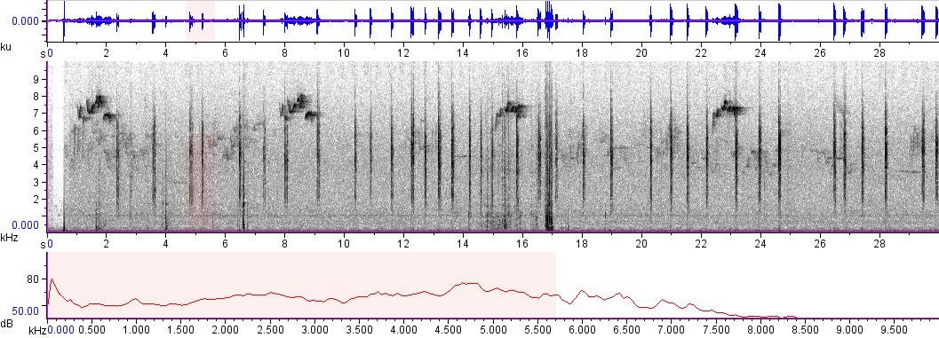 Sonogram of recording #AV 8855