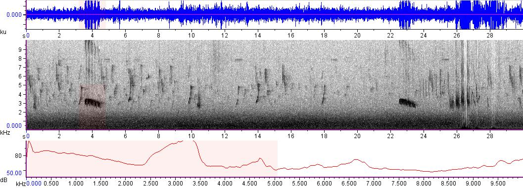 Sonogram of recording #AV 8864