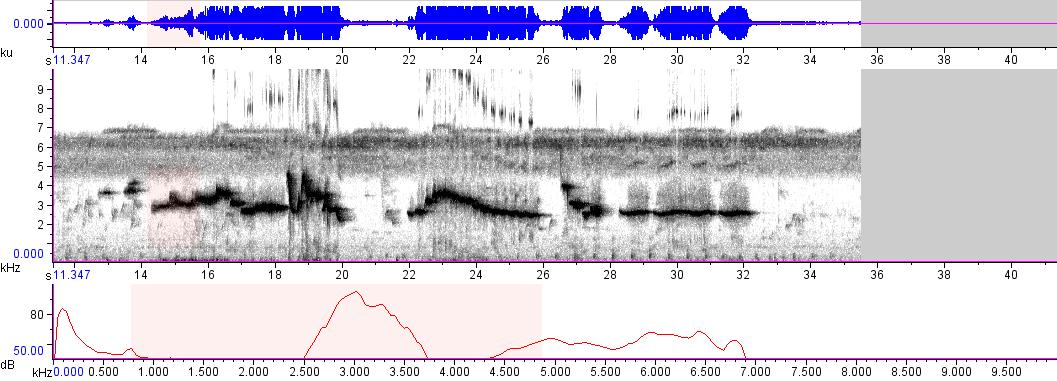 Sonogram of recording #AV 8868
