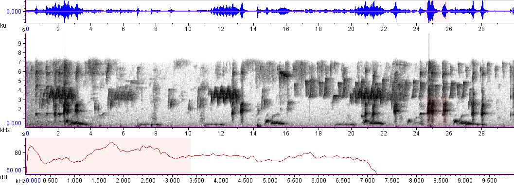 Sonogram of recording #AV 8874