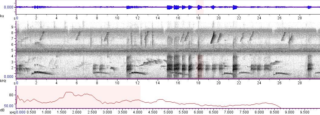 Sonogram of recording #AV 8875