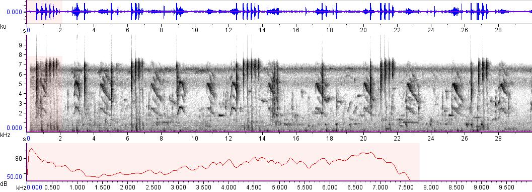 Sonogram of recording #AV 8891