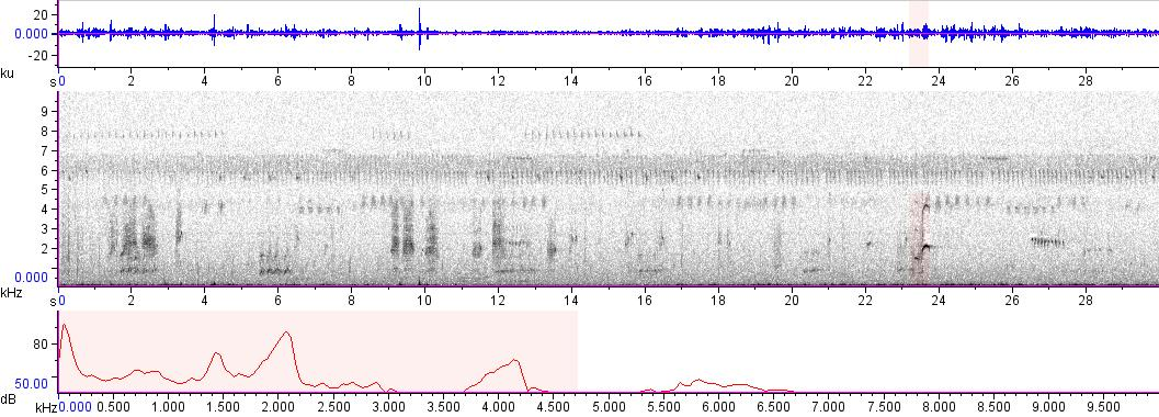 Sonogram of recording #AV 8902