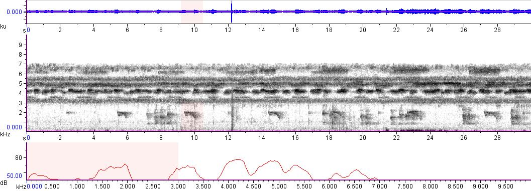 Sonogram of recording #AV 8905