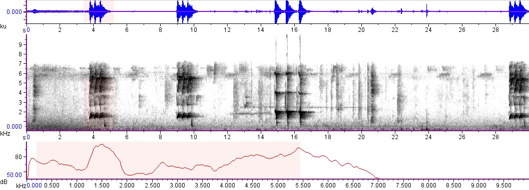 Sonogram of recording #AV 8915