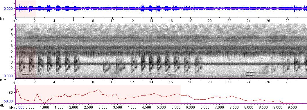 Sonogram of recording #AV 8917