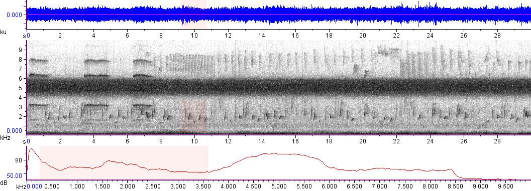 Sonogram of recording #AV 8922