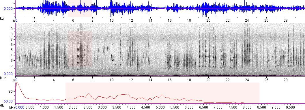 Sonogram of recording #AV 8928