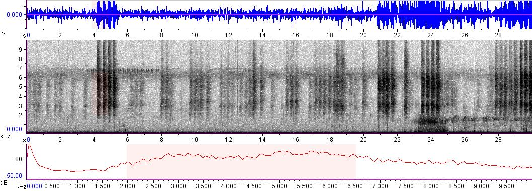 Sonogram of recording #AV 8930